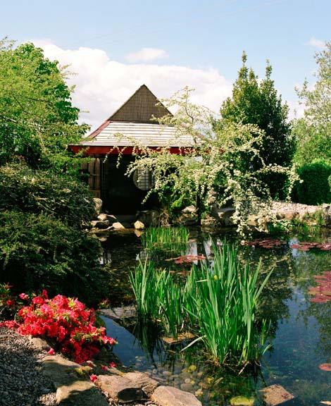 Japenese Garden in Dublin